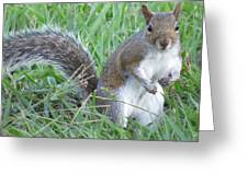 Squirrel On The Grass Greeting Card