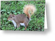 Squirrel On The Ground Greeting Card