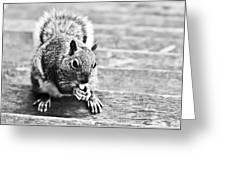 Squirrel Greeting Card by Paulina Szajek