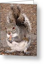 Squirrel Possessed Greeting Card