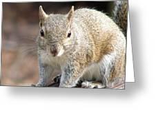 Squirrel Profile Greeting Card