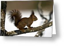 Squirrel Profile Greeting Card
