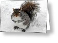 Squirrel Saying Feed Me Please At Niagara Falls Greeting Card