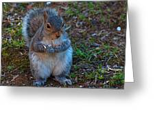Squirrel Seeds Greeting Card