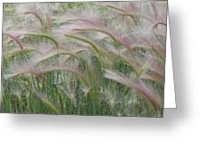 Squirrel Tail Grass In The Wind Greeting Card