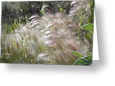Squirrel Tail Grass Panguitch Lake Utah Greeting Card