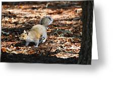 Squirrel Time Greeting Card