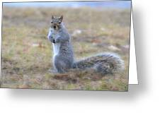 Squirrel With Dirt On Nose Greeting Card
