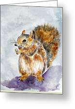 Squirrel With Nut Greeting Card