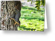 Squirrel With Pecan Greeting Card