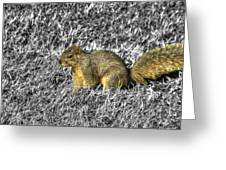 Squirrling Around Looking For Nuts Greeting Card