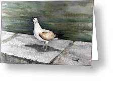 St Augustine Gull Greeting Card