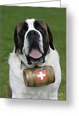 St. Bernard Dog Greeting Card