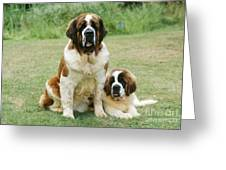 St Bernard With Puppy Greeting Card