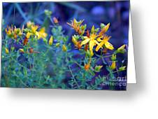 St John's Wort In The Forest Greeting Card