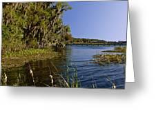 St Johns River Florida Greeting Card