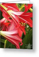 St. Joseph Lilies Greeting Card