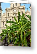 St. Louis Cathedral And Banana Trees New Orleans Greeting Card