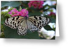 St. Louis Zoo Butterfly Greeting Card
