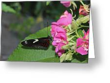 St. Louis Zoo Butterly Greeting Card