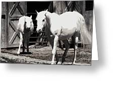 Stable Pair Greeting Card