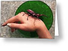 Stag Beetle On Hand Greeting Card by Daniel Eskridge