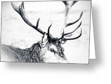 Stag In Black And White Greeting Card