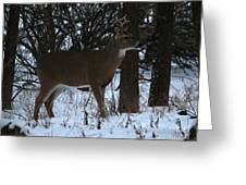 Stag In The Woods Greeting Card