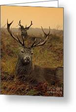 Williams Fine Art Stag Party The Series  Greeting Card