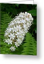 Stagger Grass Lily Greeting Card