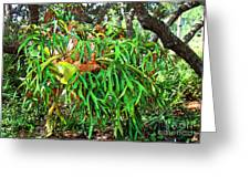 Staghorn Fresco Greeting Card