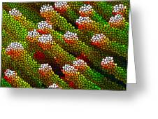 Stained Glass Coral Reef 1 Greeting Card by Lanjee Chee
