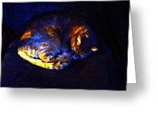 Stained Glass Snoozer Greeting Card