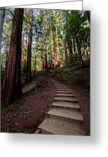 Stairs Into The Woods Greeting Card