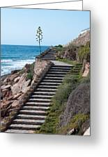 Stairway And Agave On Top. Greeting Card