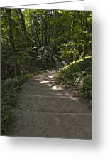 Stairway In Nature Greeting Card
