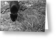 Stalking Cat Greeting Card