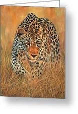 Stalking Leopard Greeting Card