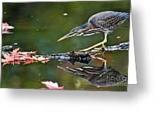 Stalking Reflection Greeting Card