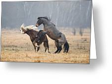 Stallion Challenge Greeting Card