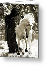 Stallion Dances In Sepia Greeting Card