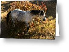 Stallion Of The Badlands Greeting Card