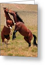 Stallion Way Greeting Card