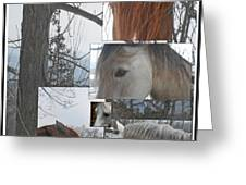 Stallions Collage There Is A Connection Greeting Card