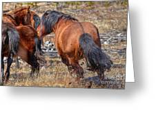 Stallions Gone Crazy Greeting Card