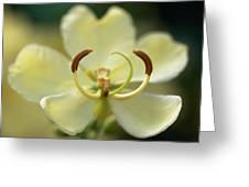 Stamen Closeup Greeting Card