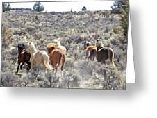 Stampede Of Wild Horses Greeting Card