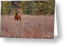 Stand Free Greeting Card