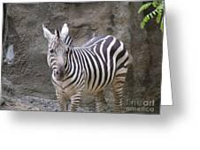 Standalone Zebra Greeting Card