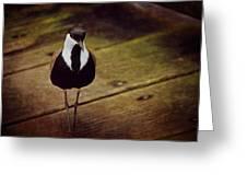 Standing Bird Greeting Card